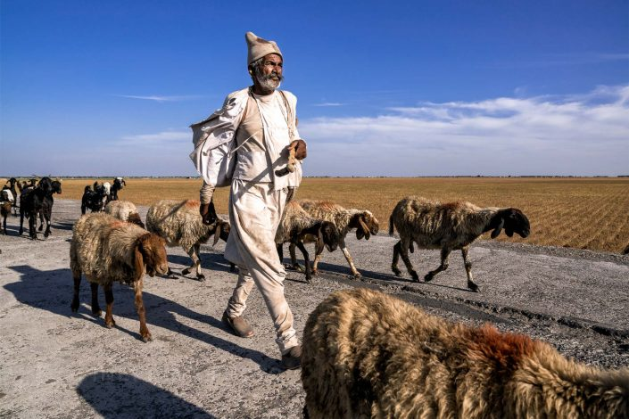 Journey of the shepherd / ID: india18-45296