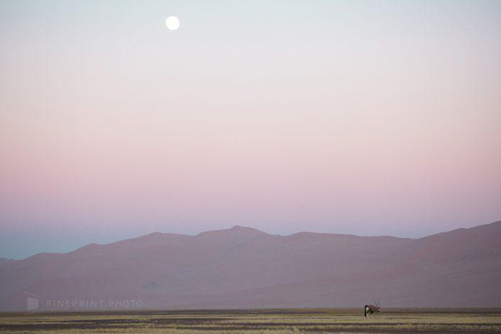 Namib Desert, Namibia, 2011 | ID: Namibia2011_ID756